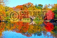 Foliage New York City Central Park 003
