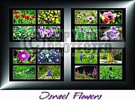 Israel Flowers 002