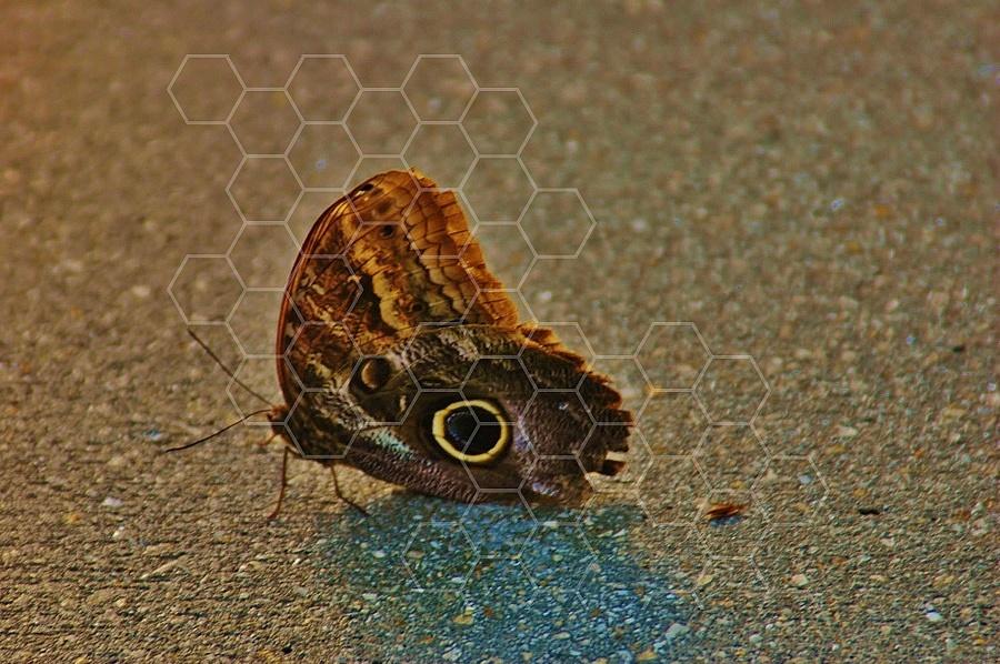 Butterfly 0008