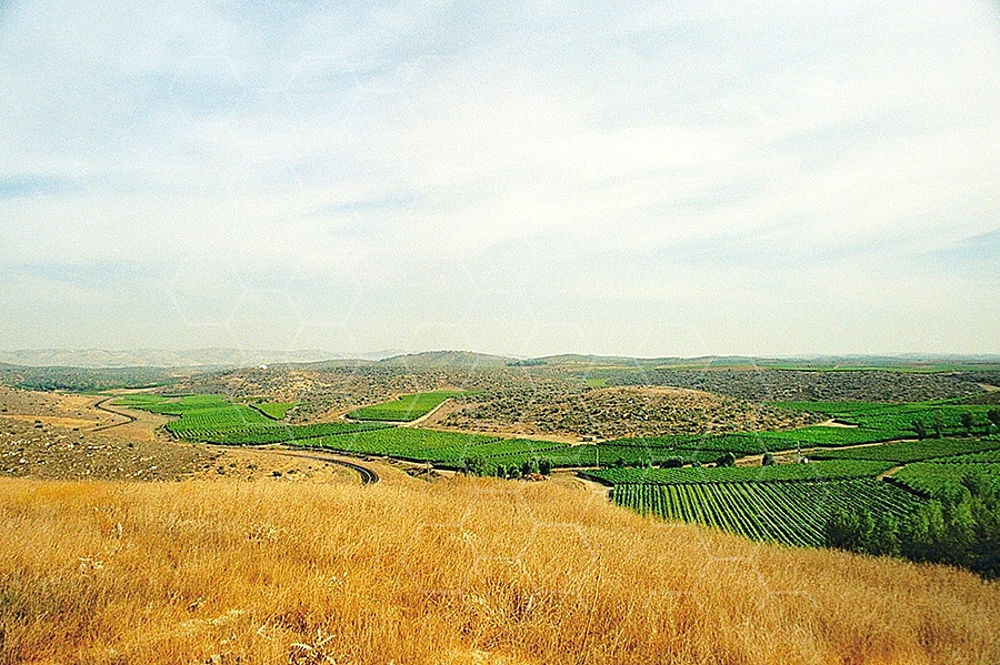 Valley of Elah 002