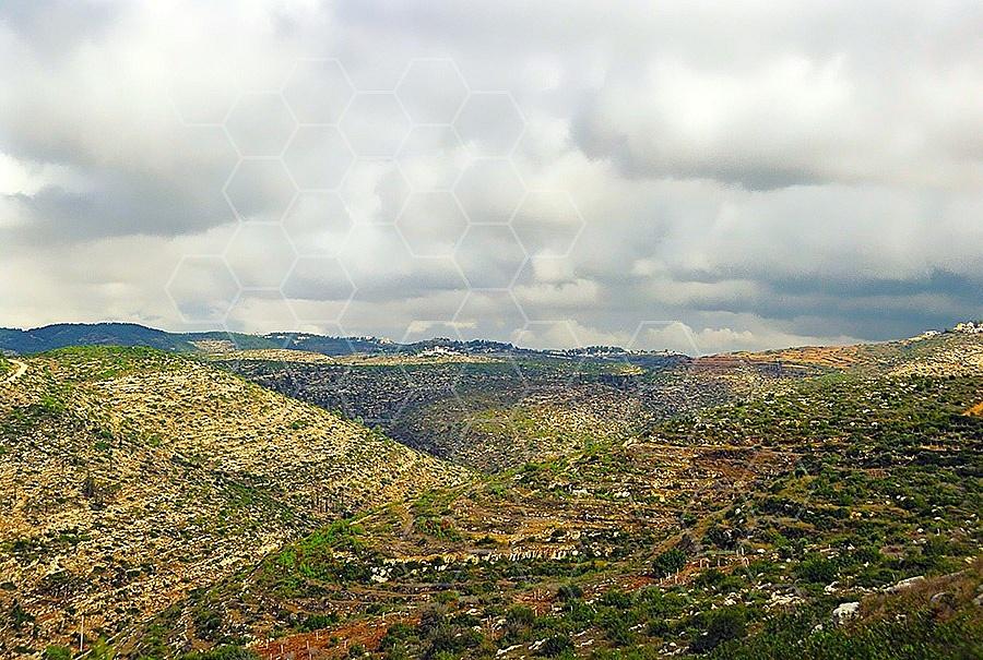 Judaean Hills 007