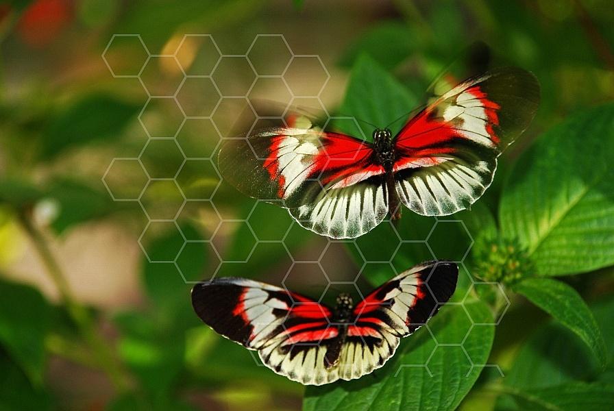 Butterfly 0005