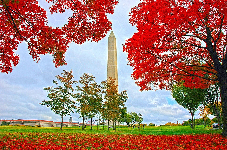 Foliage Washington Dc 008