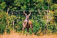 Kudu 0003