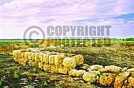 Tel Miqne 004