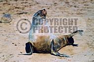 Seal Fish 0009