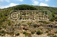 Mount Carmel 002