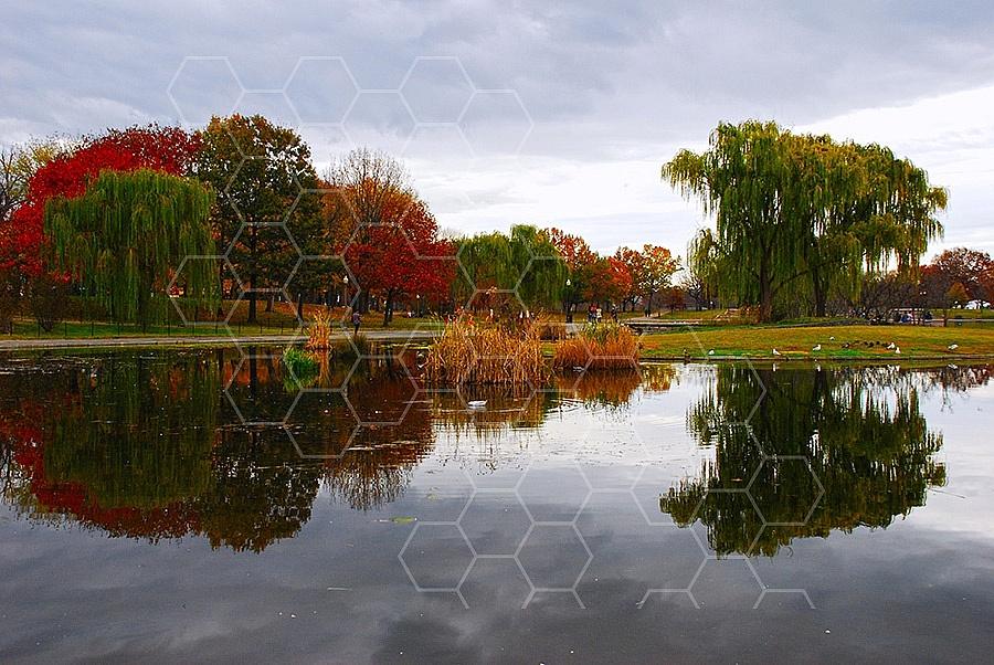 Foliage Washington Dc 014