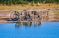 Elephant 0026