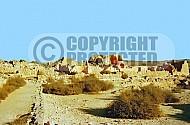 Shivta Nabataean City 007