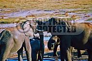 Elephant 0023