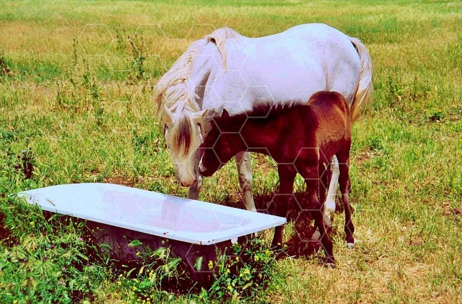 Horse 0015