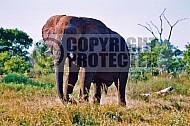Elephant 0046