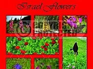 Israel Flora 007