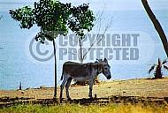 Donkey 0003
