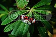 Butterfly 0021