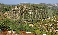Judean Hills 001