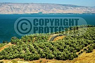 Sea of Galilee Kinneret 0005