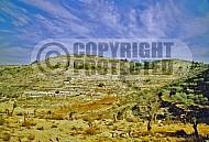 Judaean Hills 0010
