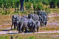Elephant 0035
