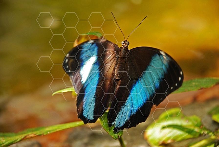 Butterfly 0003