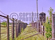 Majdanek Barbed Wire Fence 0006