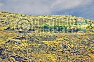 Golan Heights 007