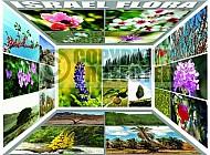 Israel Flowers 001