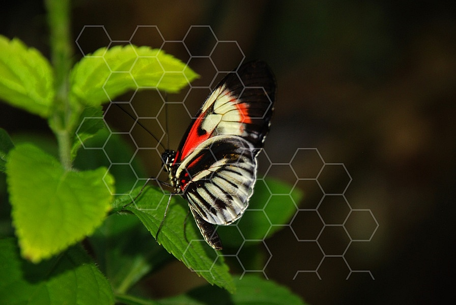 Butterfly 0012
