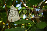 Butterfly 0037