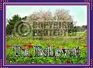 Tu Bshevat 002