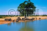Elephant 0002