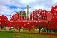 Foliage Washington Dc 007