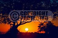 Africa Sunset 001
