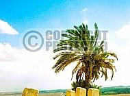 Tel Megiddo Ruins 011