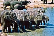 Elephant 0015