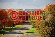 Foliage Washington Dc 001