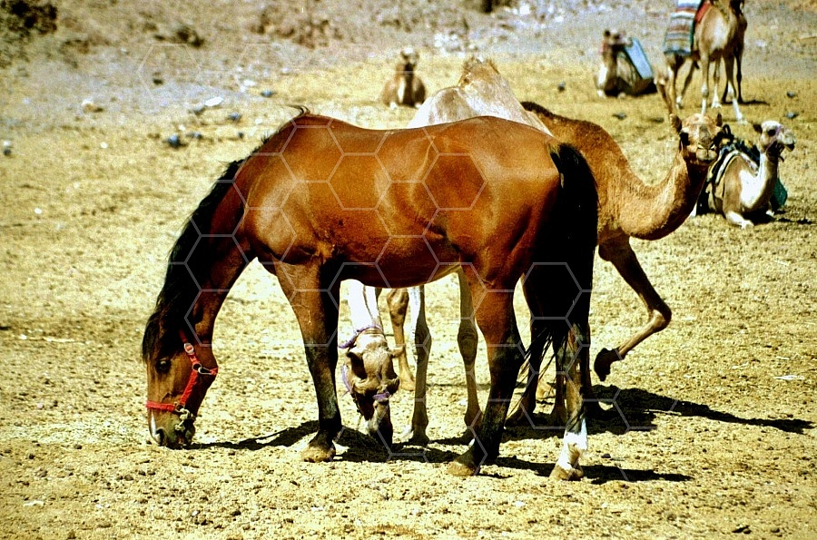 Horse 0010