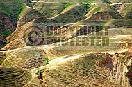 Judean Desert 013