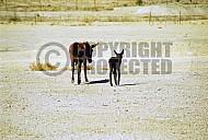 Donkey 0010