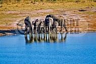 Elephant 0031