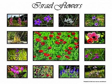 Israel Flora 004