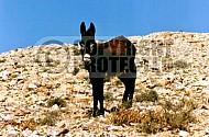 Donkey 0007