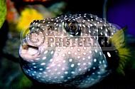 Fish 0002
