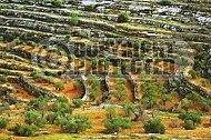 Judaean Hills 0009