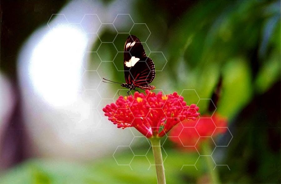 Butterfly 0047
