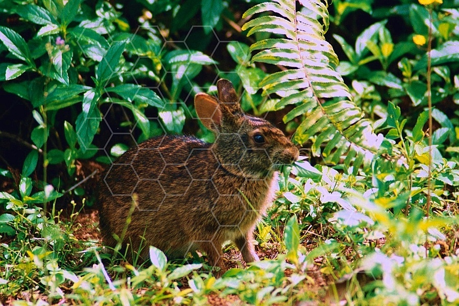 Rabbit Hare 0002