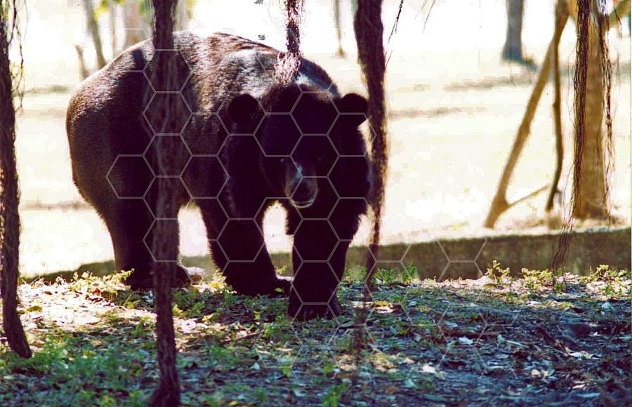 Bear 0012