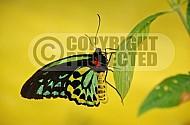 Butterfly 0004