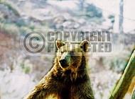 Bear 0006
